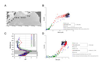 Dissolved zinc and silicate decoupling in the North Pacific Ocean