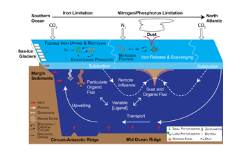 Changing the paradigm on the oceanic iron cycle