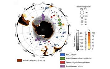 Upwelled hydrothermal iron stimulates massive phytoplankton blooms in the Southern Ocean